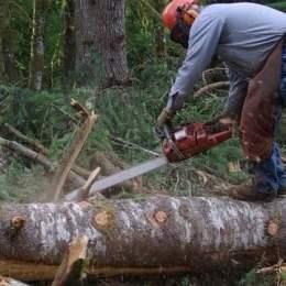 În prima jumătate a acestui an, din pădurile Brașovului, s-a tăiat ilegal de peste 850.000 de lei
