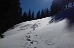 Traseele montane spre Postăvarul, nerecomandate în această perioadă. În apropierea vârfului există risc de avalanșă