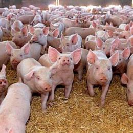 Danezii de la Premium Porc au investit 32,5 milioane de euro în fermele din Brașov și Sibiu