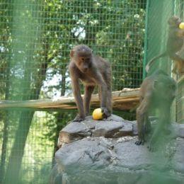 Casa maimuțelor de la Zoo Brașov, care fi deschisă vizitatorilor și iarna, va fi amenajată în schimbul sumei de 2,1 milioane de lei de o firmă din Brașov