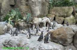 Investiție de aproape 5 milioane de euro pentru a aduce pinguni, foci și lei de mare, la Zoo Brașov