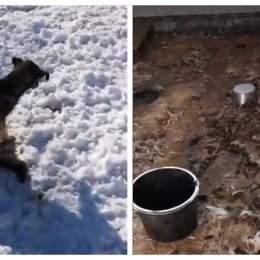 Zeci de câini înfometați până la moarte într-un adăpost din Prejmer. Cu toate acestea, depozitul era plin de hrană