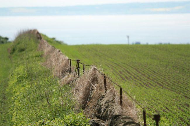 Străinii dețin peste 1.300 de hectare de teren agricol în județul Brașov