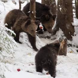 """The Guardian include România printre cele 20 de recomandări de vacanţă pentru 2020: Urşi, bizoni şi biodiversitate. """"Safari în Munții Făgăraș"""""""