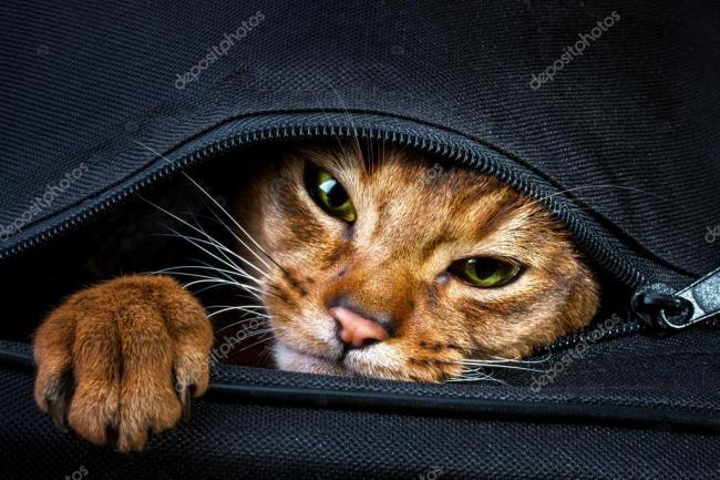 O brașoveancă s-a dus cu pisica în poșetă la mall și le-a cerut polițiștilor să modifice Ordonanța Militară ca să își poată cumpăra haine și machiaje