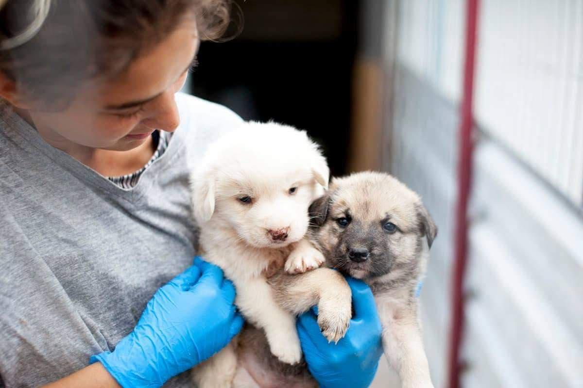 FOTO O organizație non-profit din Brașov salvează câinii abandonați. În 5 ani peste 2.000 de patrupede au fost adoptate în Germania, Olanda și Anglia