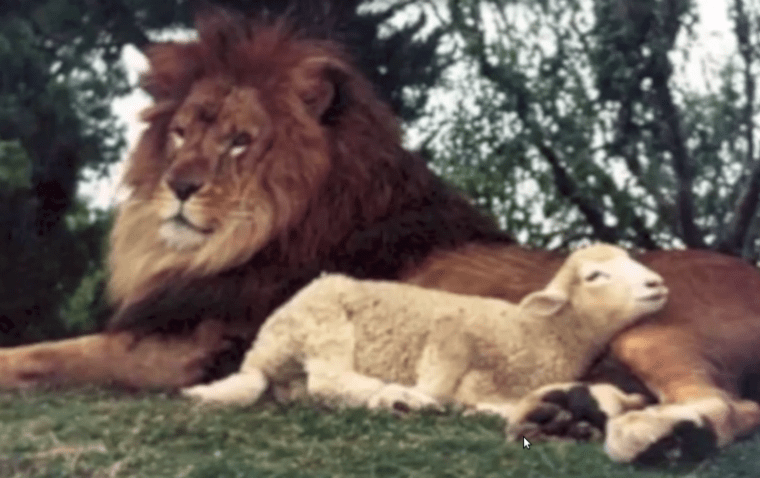 Are You a Lion or a Lamb? Lions Do WHATEVER They Please!