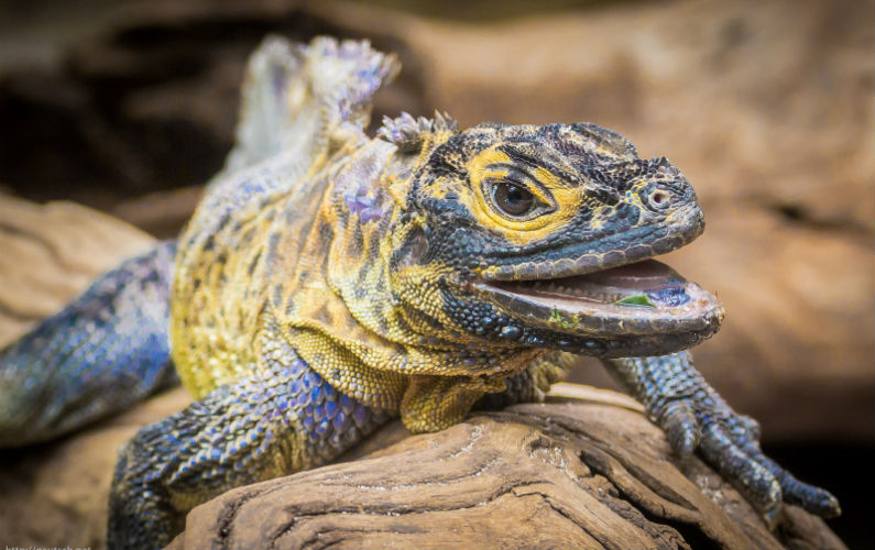 """How Our """"Lizard Brain"""" Causes Procrastination & How to Avoid Giving Into it"""