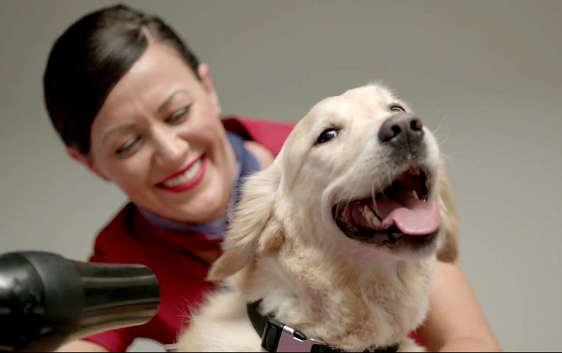 Airport Lounge for Pets: Only Virgin Australia can Pull it Off!