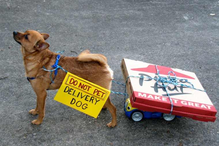 Pizza delivery dog