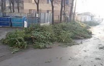 Evaluare: Mii de brazi tăiați ilegal de Crăciun și două milioane de lei – amenzi