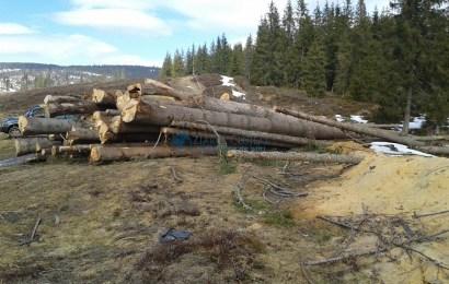 Cum vom putea spune STOP furturilor de lemne?