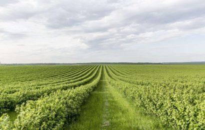 Ce bani vor primi agricultorii gorjeni