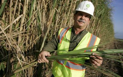 Flotida sugar growers