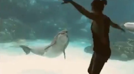 Watch a dolphin express joy over dancing girl