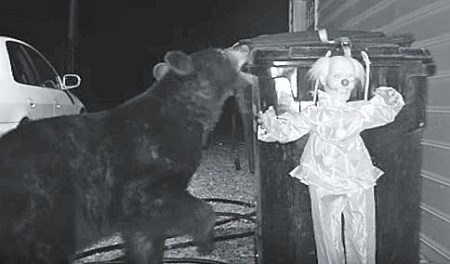 clown doll scares off bear from trash stealing ogle family