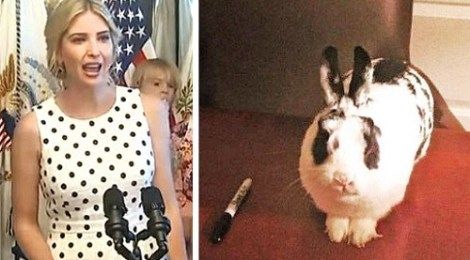screenshot ivanka trump rabbit bunny marlon bundo botus