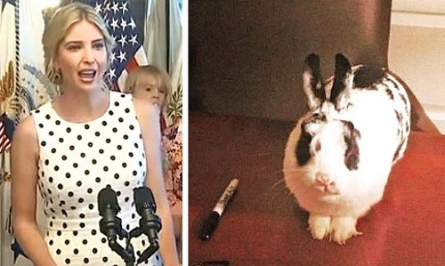screenshot ivanka rabbit bunny marlon bundo botus