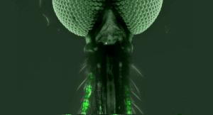 sivrisinek-beyin-koku-bizsiziz
