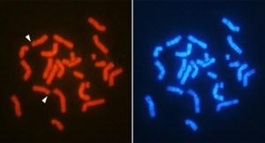 y-kromozomu-olmadan-nasil-erkek-olunur-bizsiziz