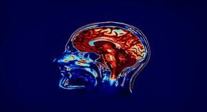insan-hafizasini-gelistirmek-icin-yapay-beyin-parcasi-yapildi-bizsiziz