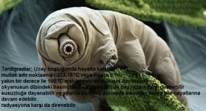 tardigradlarin-ciftlesme-davranislari-ilk-kez-goruntulendi-bizsiziz