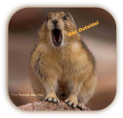 Picture of a Pika