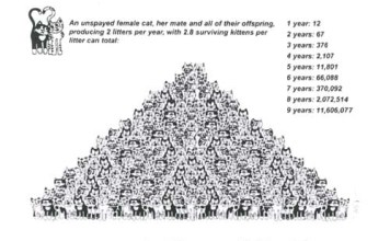 Cat overpopulation pyramid, while not accurate portrays just how much of a national crisis cat overpopulation is