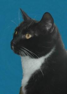 A regal kitty