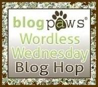 Wordless Wednesday Blog Hop