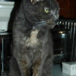SIs cat Smokey Blue in Heaven or waiting for her human on the Rainbow Bridge.