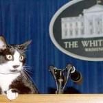 President Clinton's cat Socks