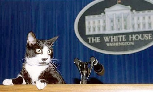 Presidential Cats