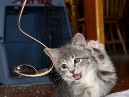 FLenny, a feral kitten, learned everything from humans