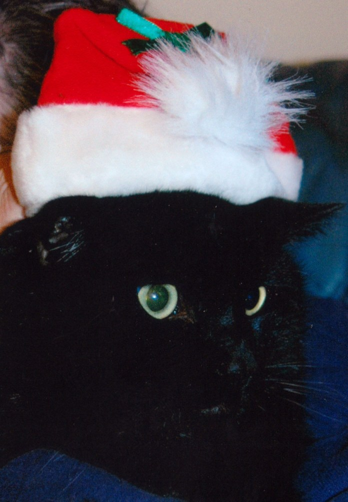 Cat in Santa Hat