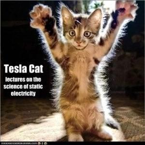 Static Electricity in Cat's Fur