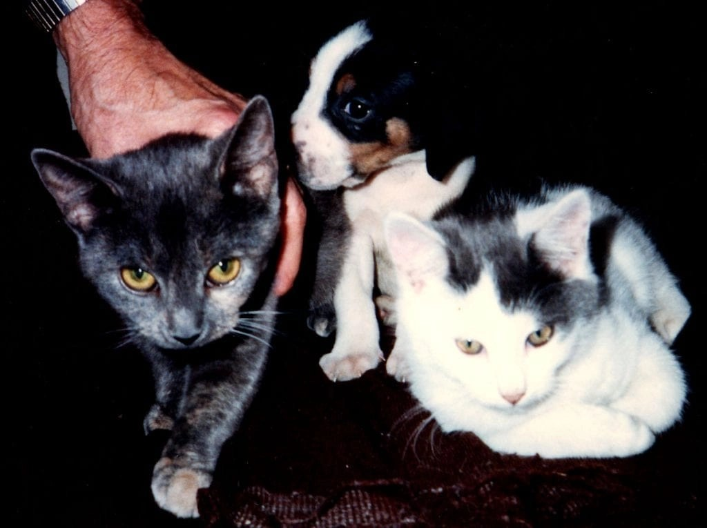 Smokey Blue hands out with kitten and new puppy
