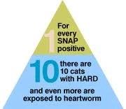 Cats get heartworm