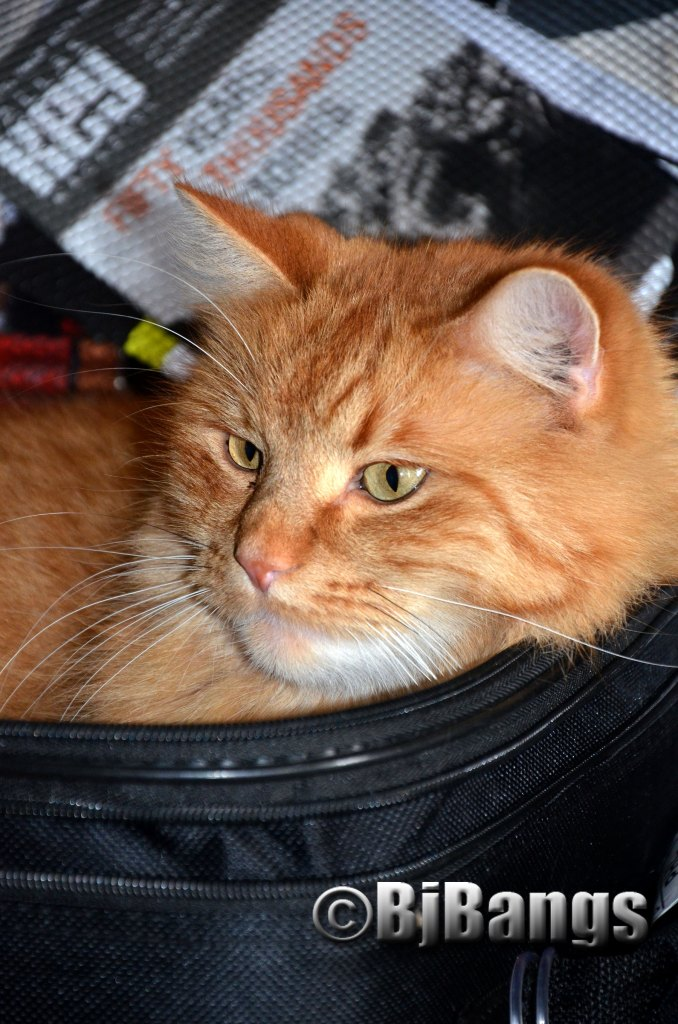 Kitty packed in suitcase and ready to go.