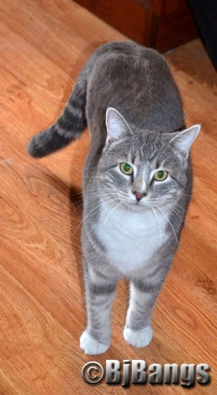 Will kitty Lenny meet his cat mom in heaven?