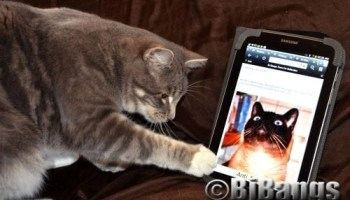 Blogging is more than creating new content Linus, the cat pictured on the tablet.