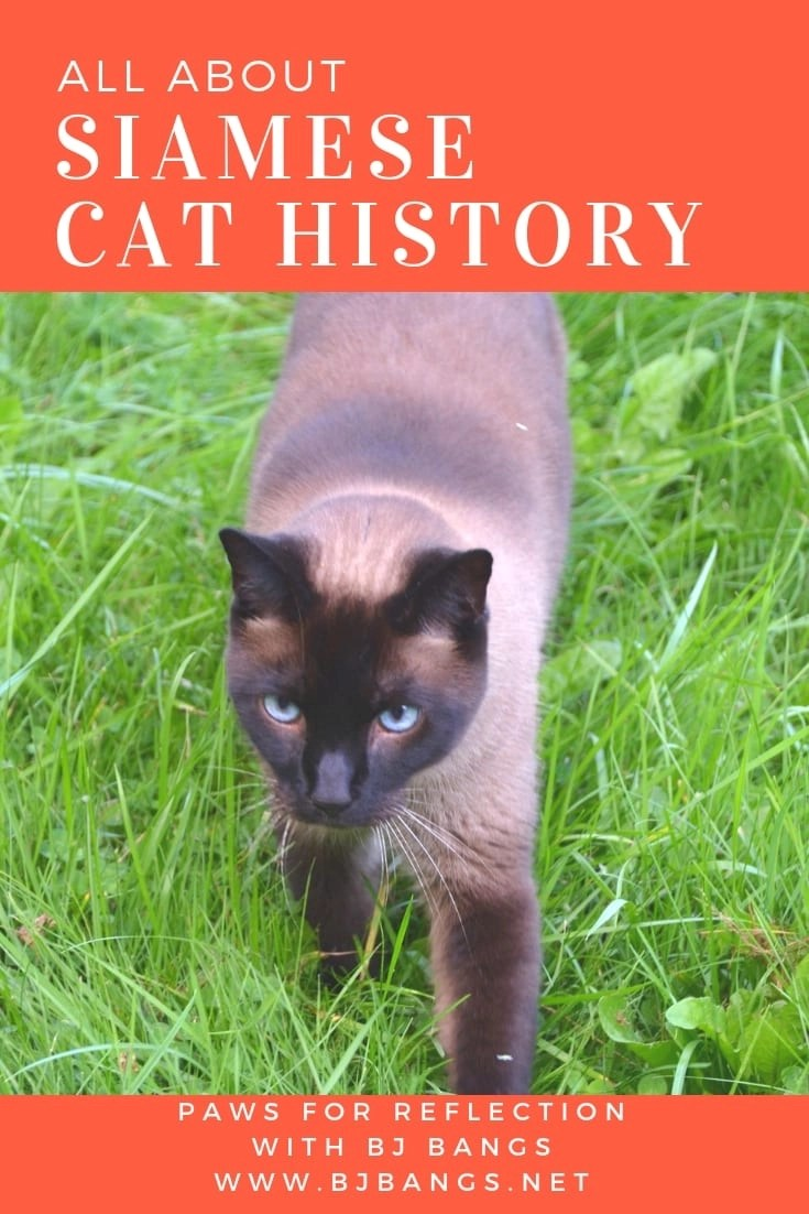 History of Siamese Cats surrounded in history