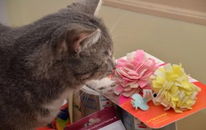 Little kitty checks out the toys thanks to all the swag from the CWA annual conference.