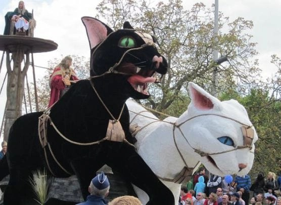 Three must do Cat Events in May 2018, Jackson Galaxy's Cat Camp, Ypres Cat Festival & Edmonton's International Cat Festival