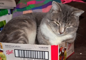 Kitty Lenny loves sleeping in boxes but he also wants soft beds for his holiday gift.