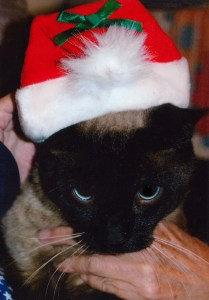 Siamese cat Linus isn't all that happy about wearing a Santa hat