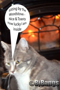 Tabby Cat Lenny enjoys the heat of the wood stove as he endures the Blizzard of 2015.