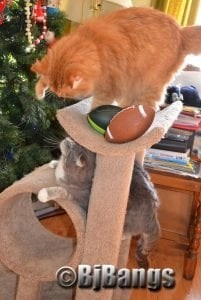 Ready, set, go, and go we did. Do you suppose us kitties did deflate the footballs?