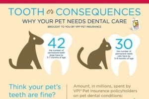 Dental Care can save your pet's life.