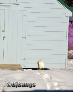 Some cats insist upon going outside in winter.